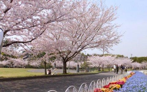 知多市 旭公園 に対する画像結果